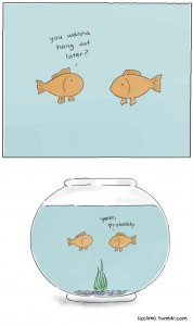 social-life-of-a-gold-fish